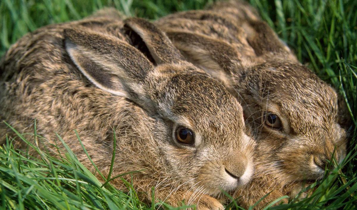 Поздравления, картинка с зайчатами