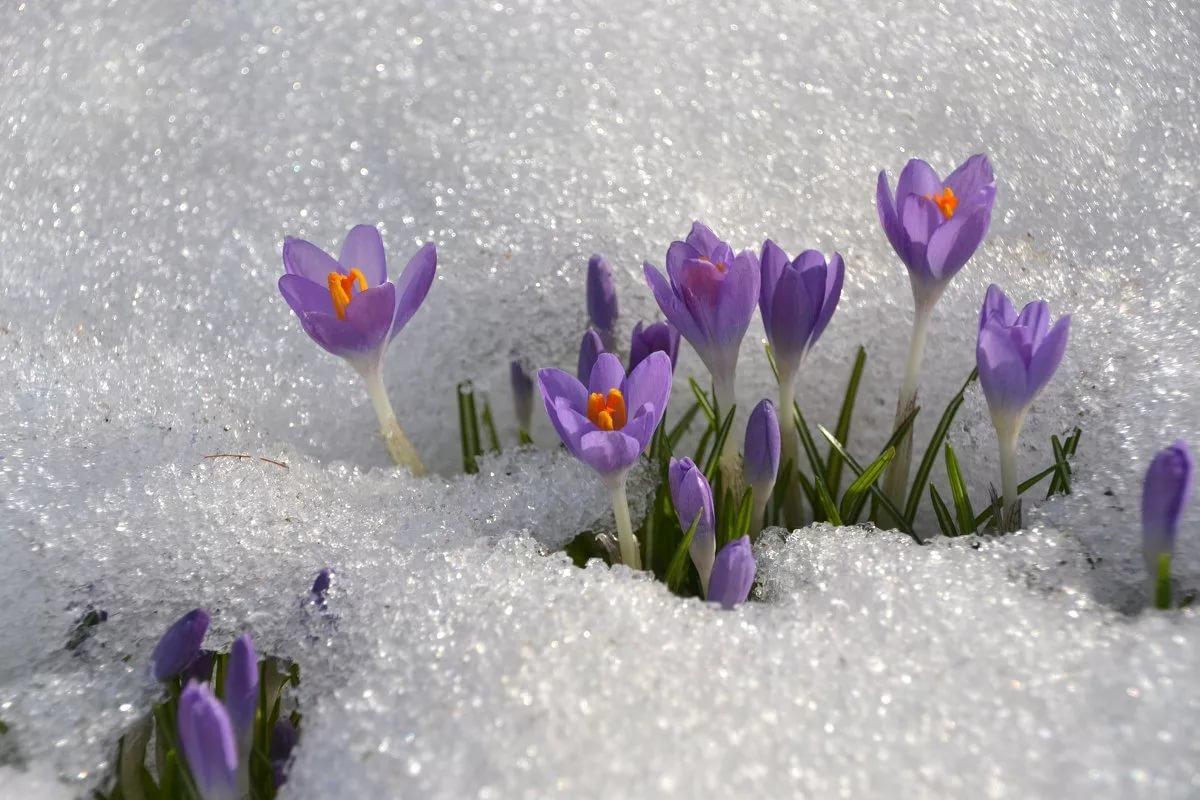 Картинка на рабочий стол цветы под снегом