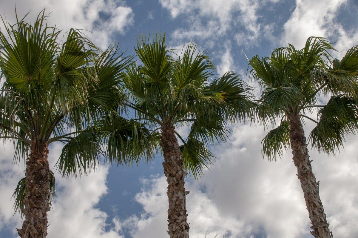 имеет пальмовые деревья картинки ракушки