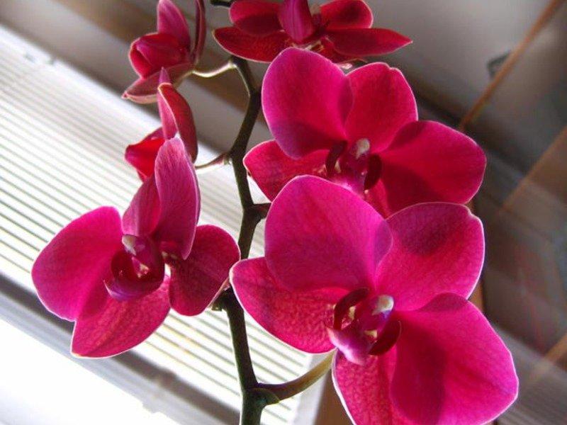 разновидности орхидеи картинки и названия критерием для
