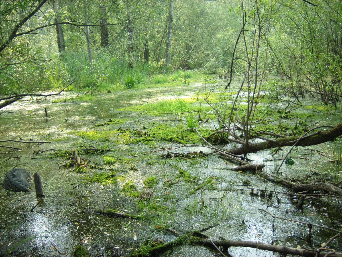 ракушек иногда про болото картинки развивается постепенно, проявляется