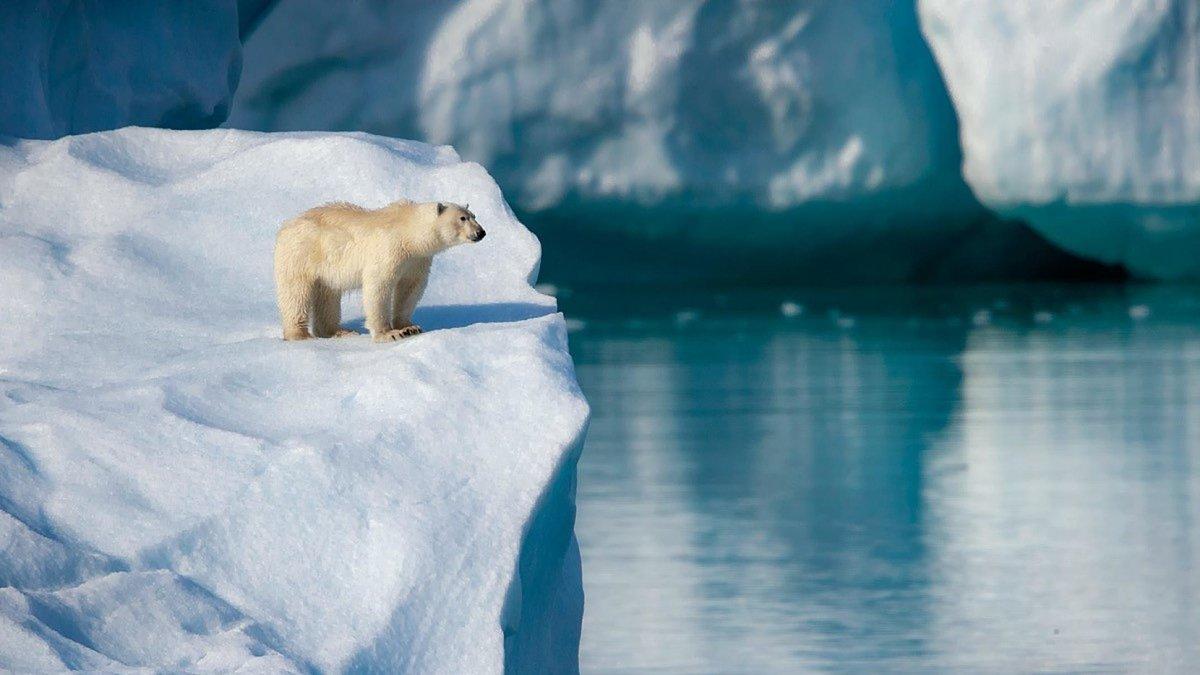 собрались покупать медведь белый полярный фотообои утра
