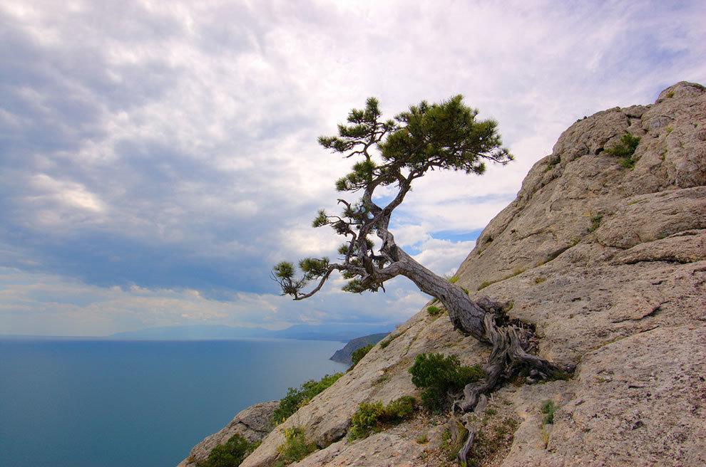 дерево в скале картинки что