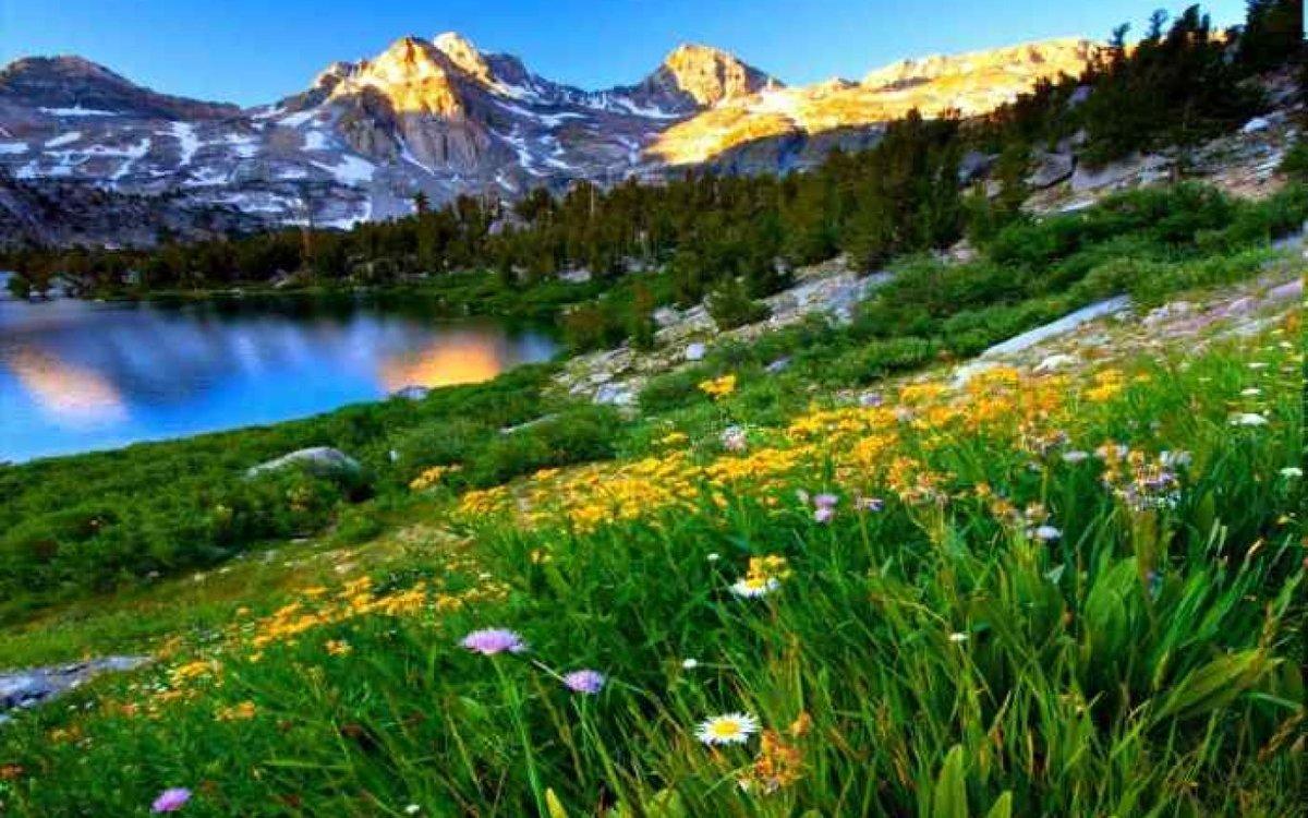 картинки лето цветы горы картошину