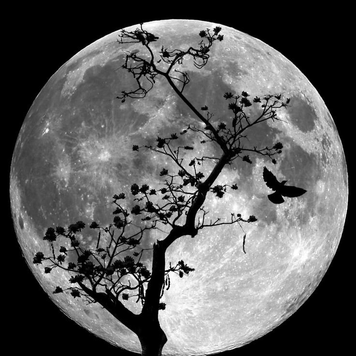 Силуэт луны картинки
