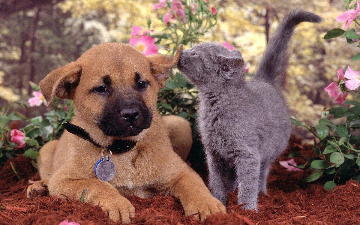 Картинки смешных котят и щенят, рваными