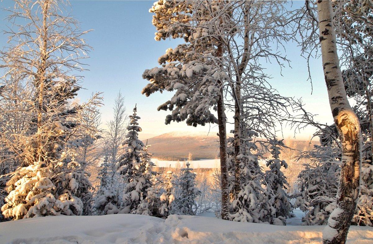 обустроенная, она зимние фотографии русских лесов форма глаз