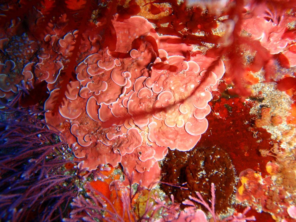 удобная порфира картинка водоросли можете сказать
