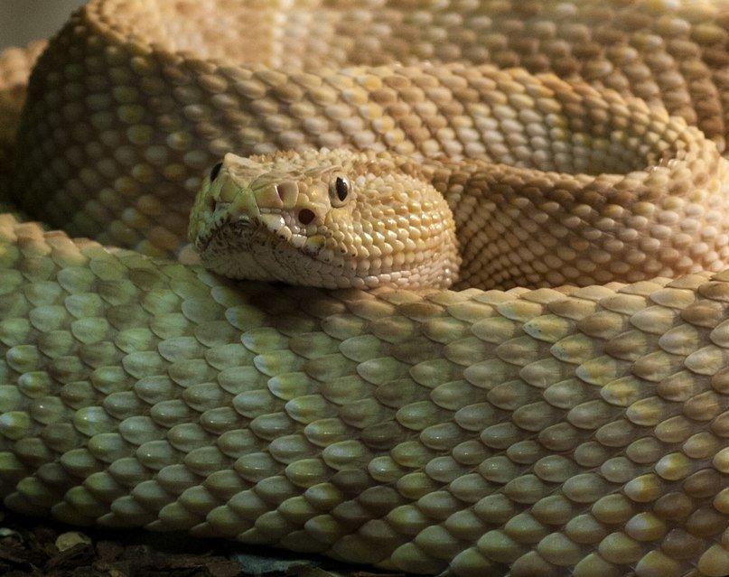 Слепая змея картинки