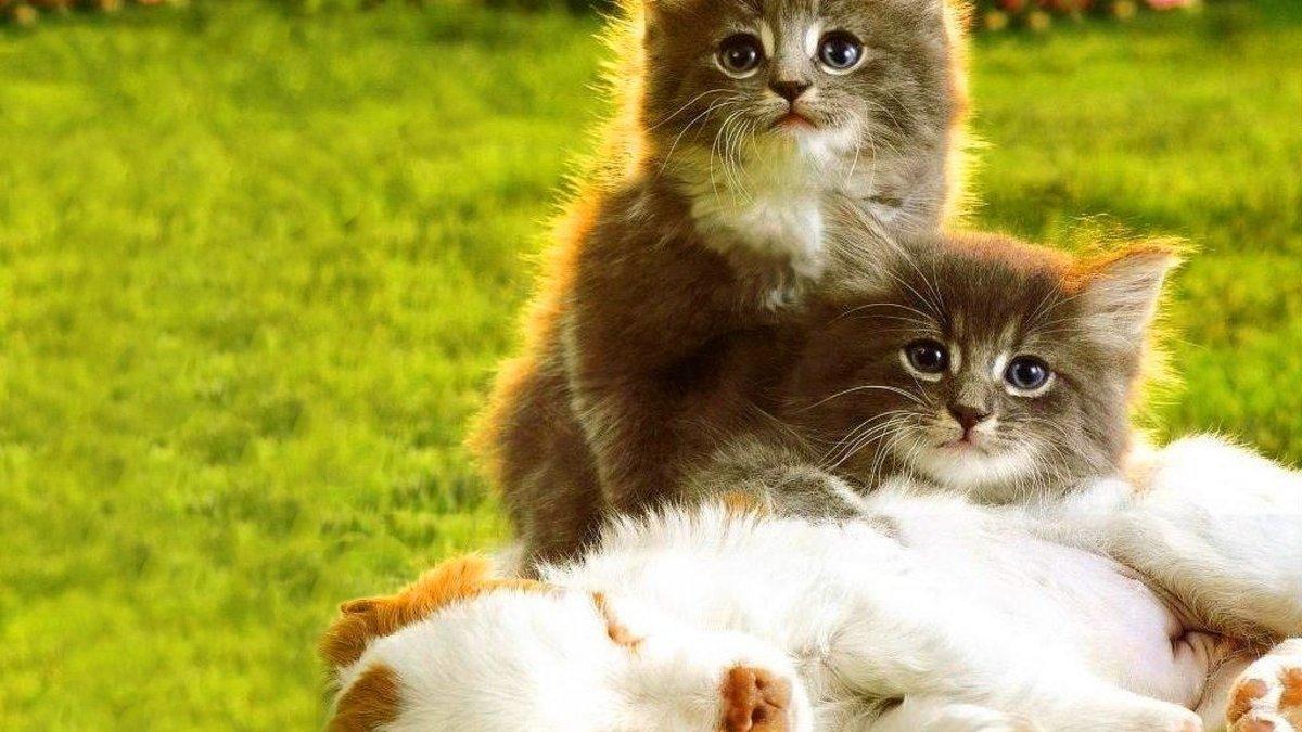 Диска, картинки с щенками и котятами милые