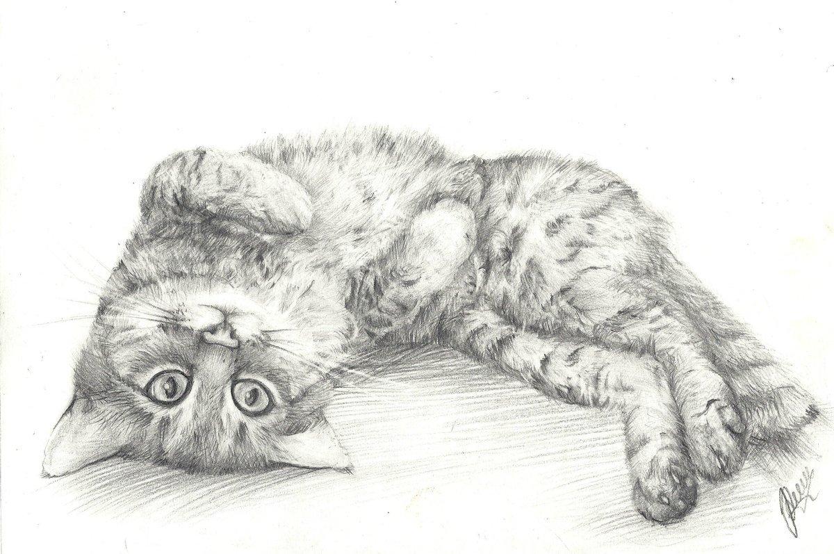 Пятницей для, картинки с кошками нарисованные карандашом