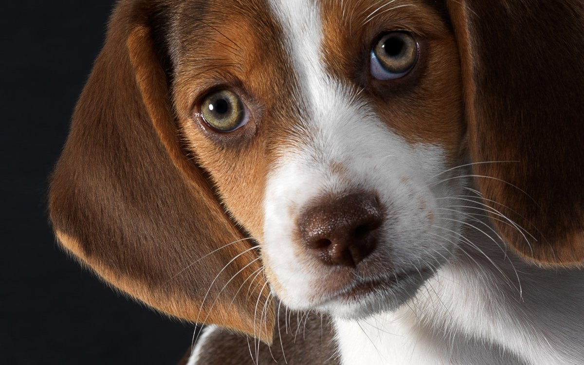 Красивые собачки картинки на телефон
