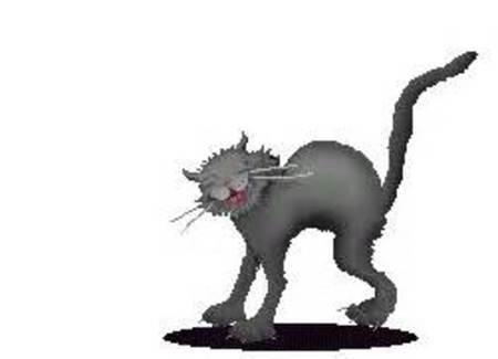 Котики гифки смешные для презентации