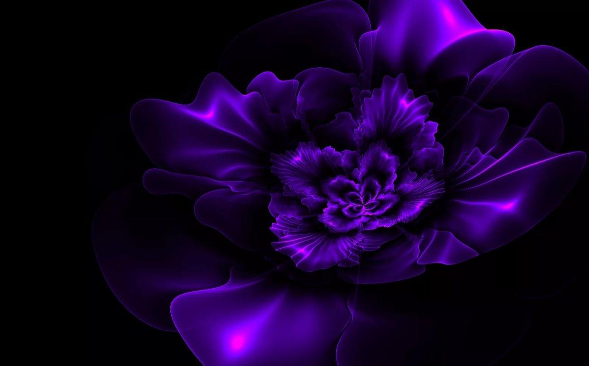 Картинки фиолетовые цветы на черном фоне