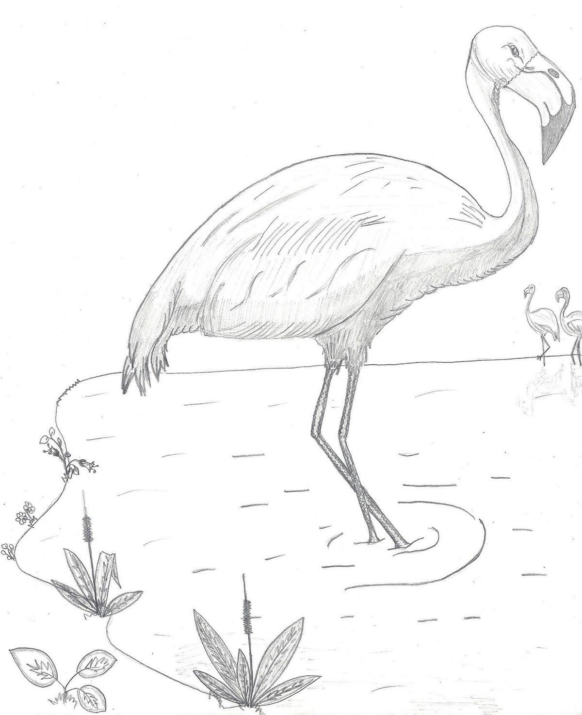 нам картинки карандашом фламинго средние осталась восторге