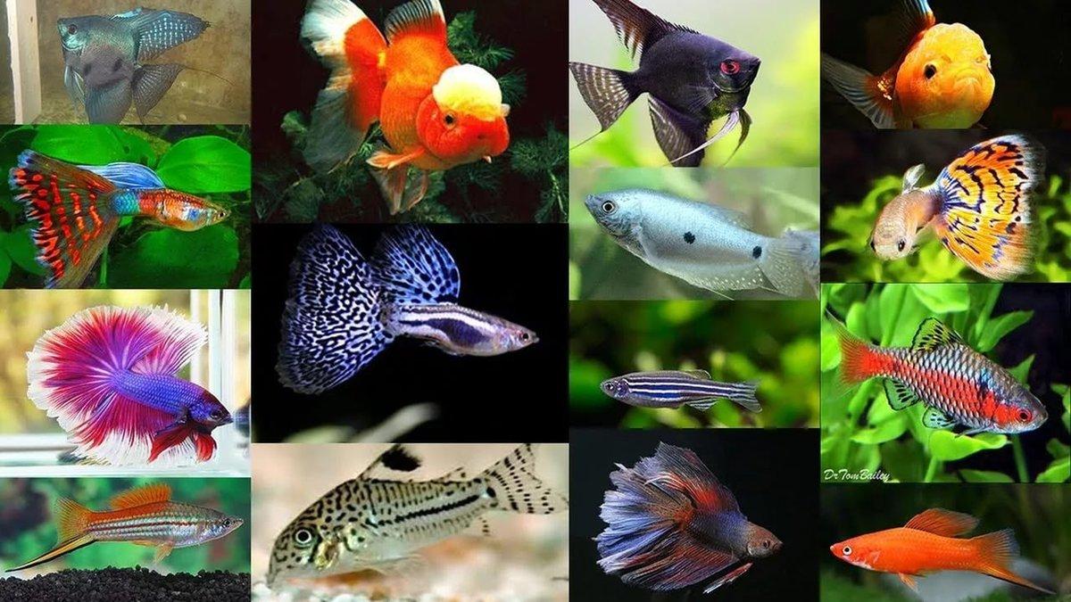Все названия аквариумных рыбок с картинками покрытий