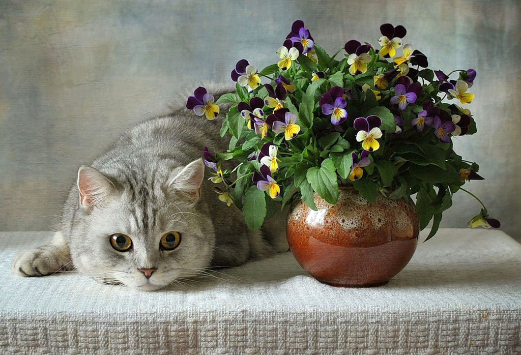 Смешные танчики, открытки или фото с кошками