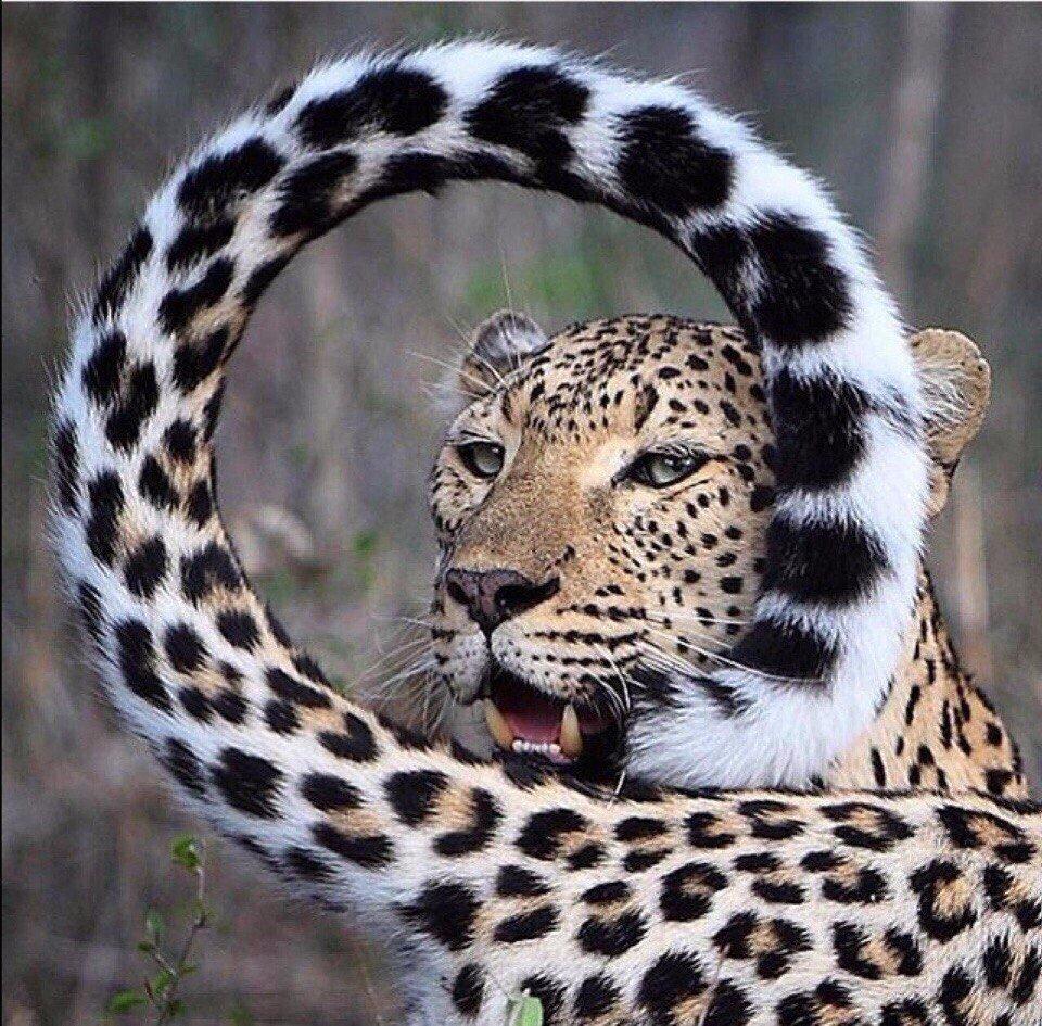 Открытки, смешная картинка я на ягуаре