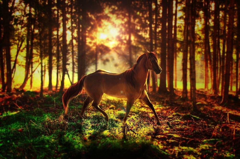 Картинки природа лошади