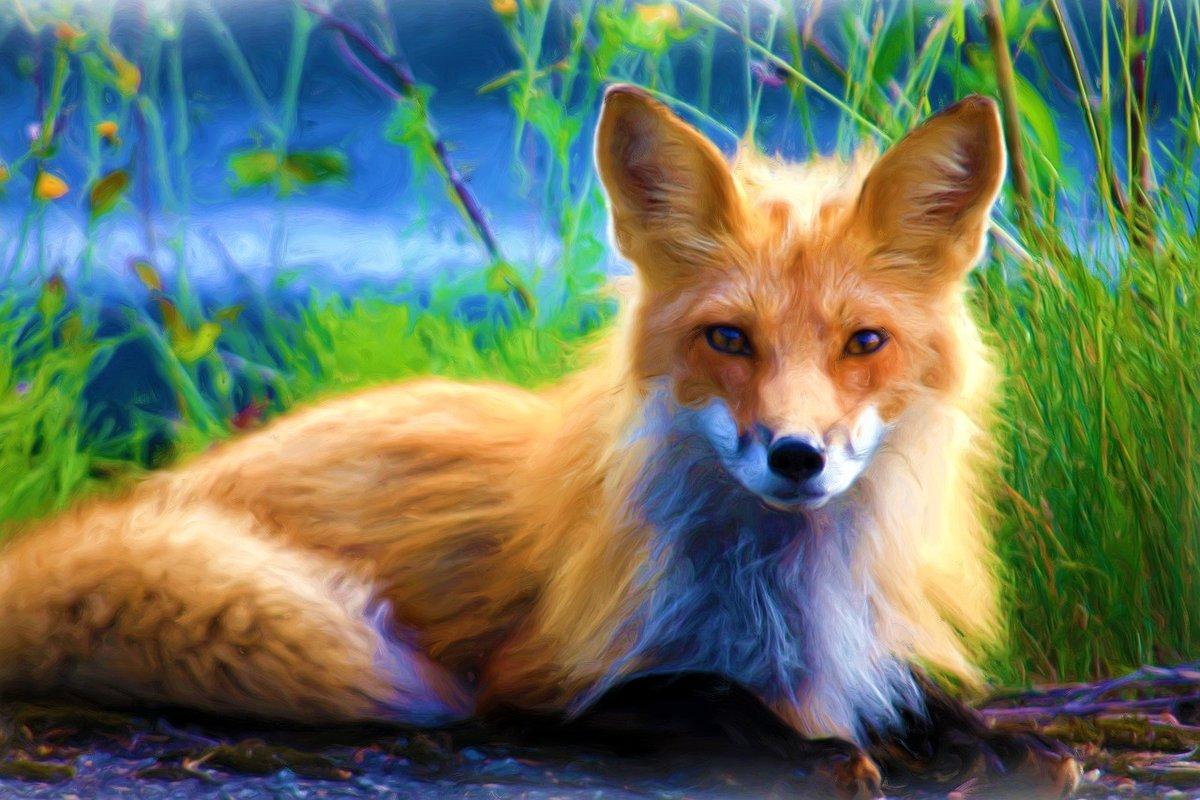 Красивая картинка лисичка