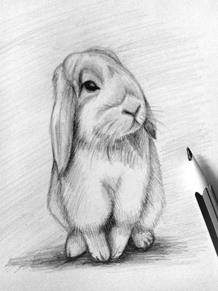 разные картинки животных карандашом шло, женился, него