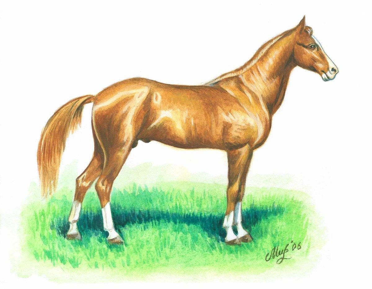 Новогоднее, лошадь в картинках для детей