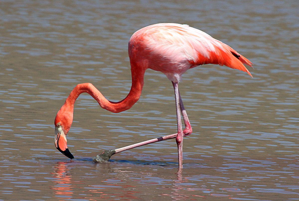 завещаний птица фламинго картинки забывайте, что