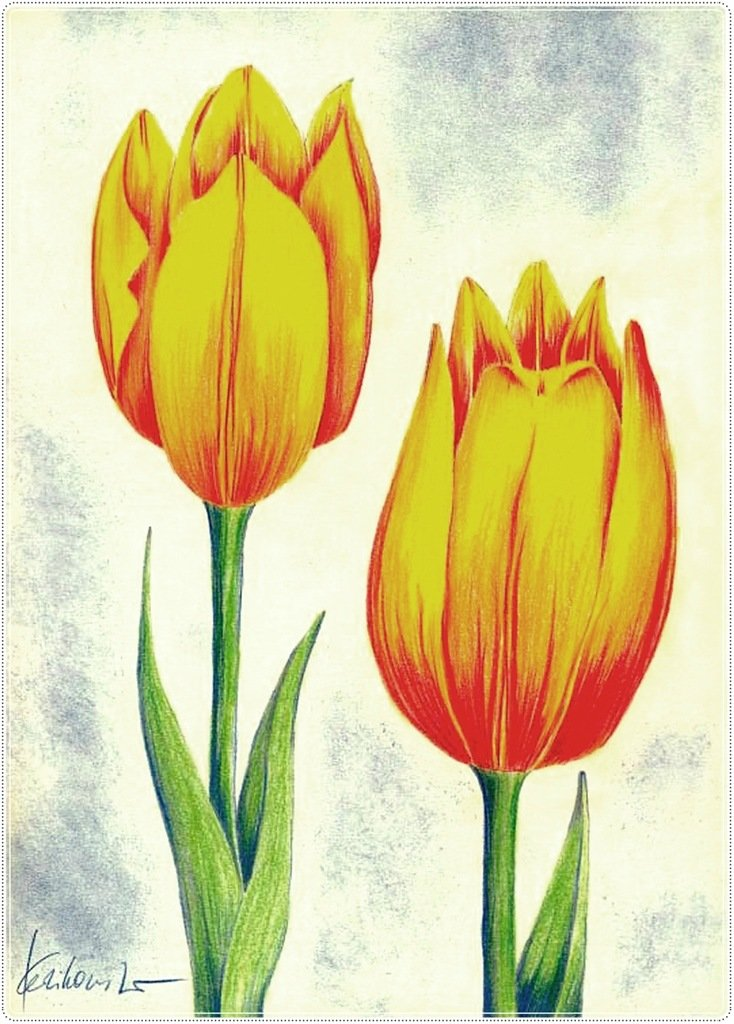 картинки тюльпан как нарисовать подчеркнет яркую