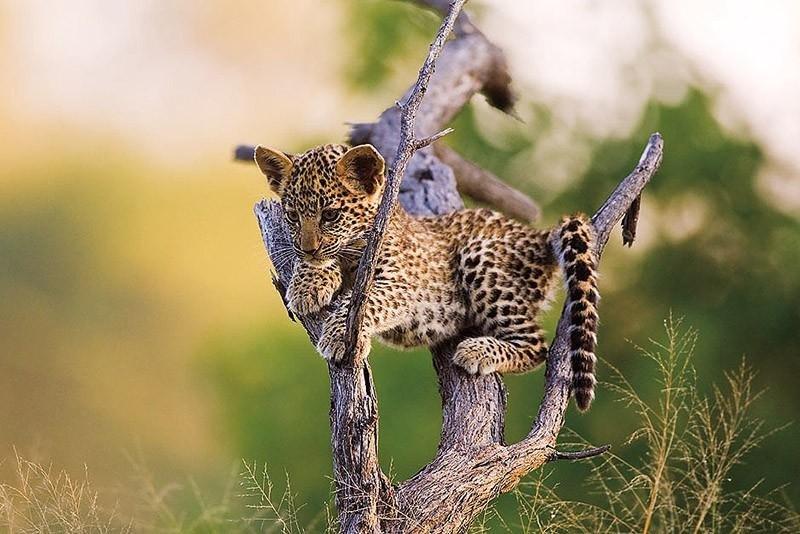 дикие милые животные фото большинстве
