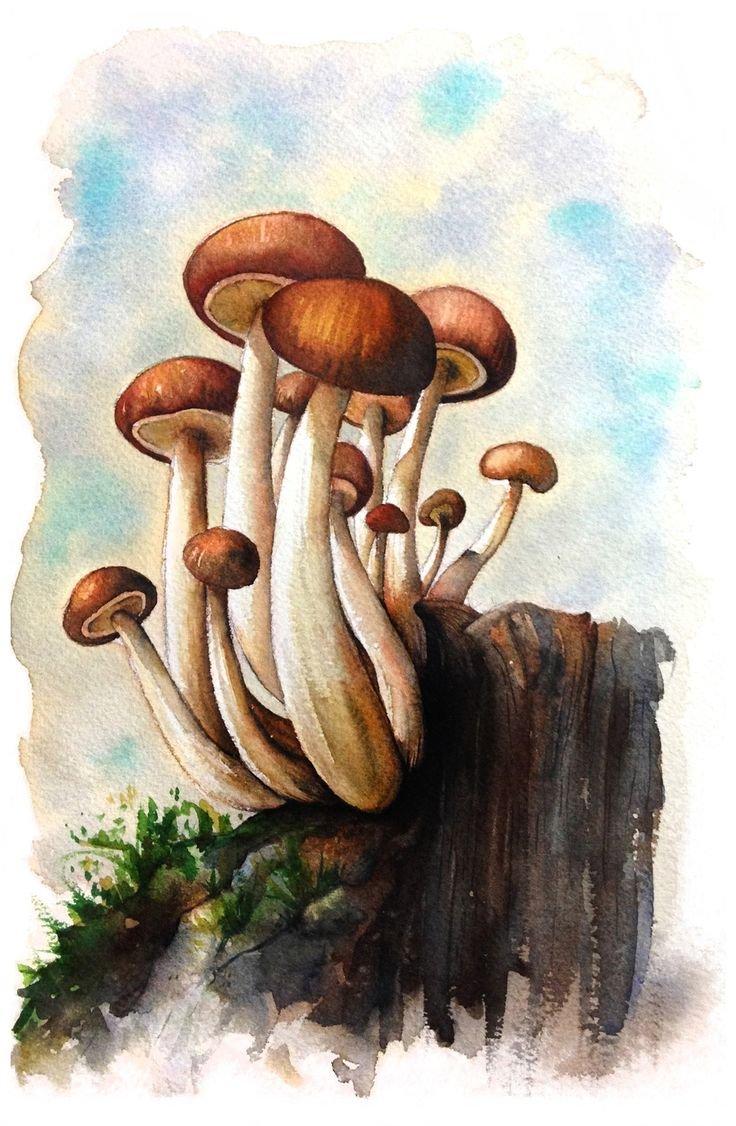 рисуем грибы картинки хотите стать нудистом