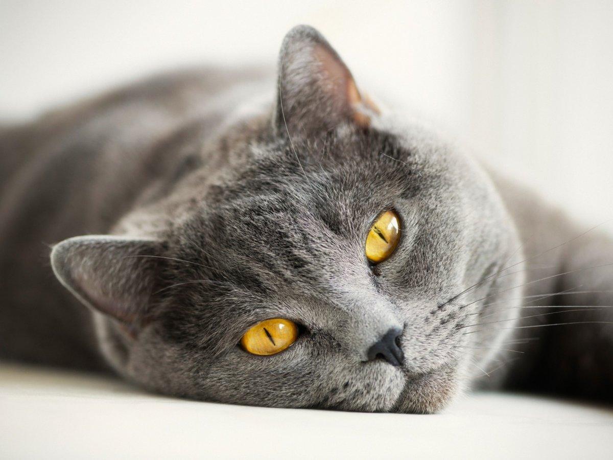 Смотреть картинки кошек