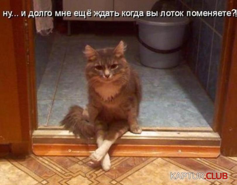 Красивые, картинки ржачные до слез про кошек с надписями до слез про