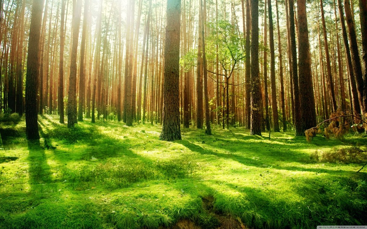 Картинки о лесе, квиллинг днем