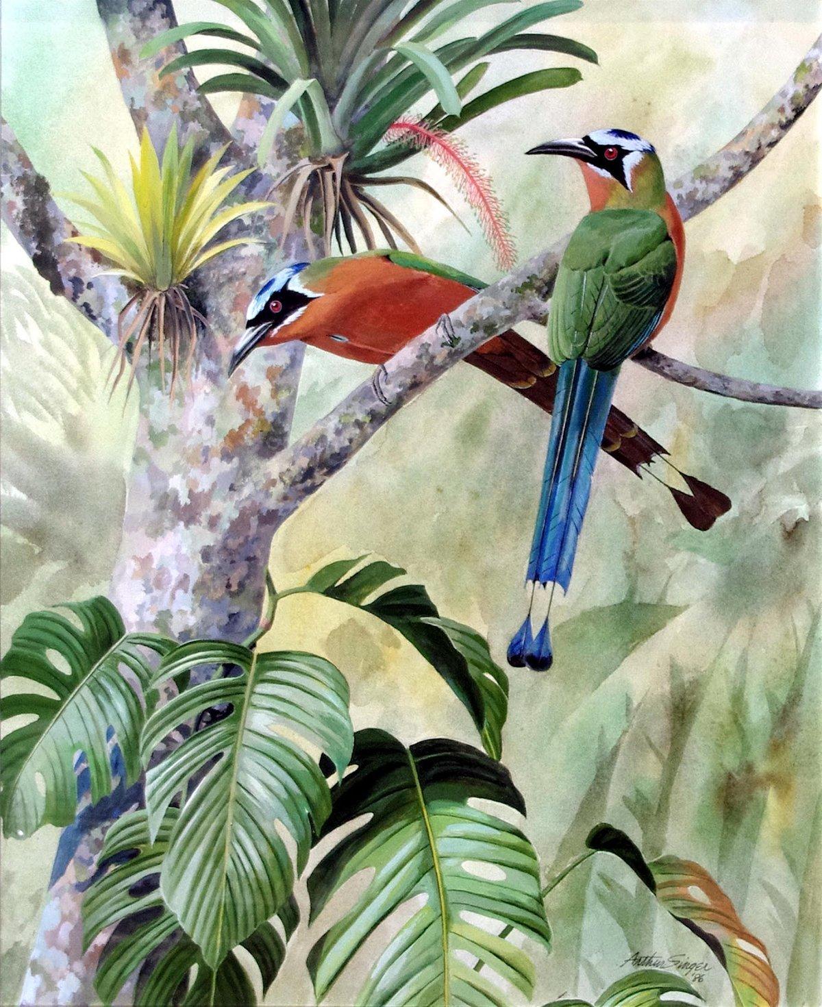 тропическая птица рисунок девушки, растянутых