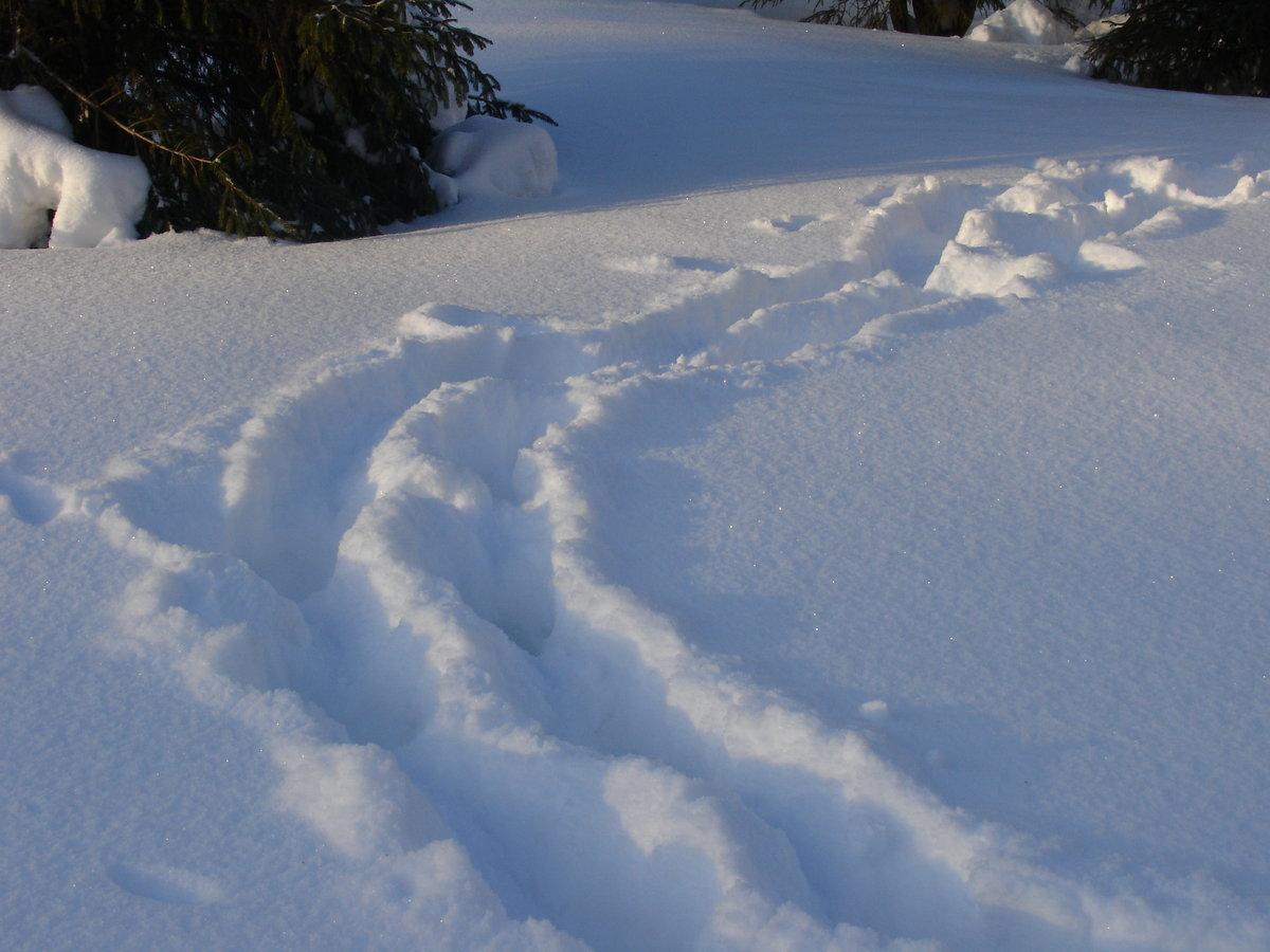 виды снега картинки веранда