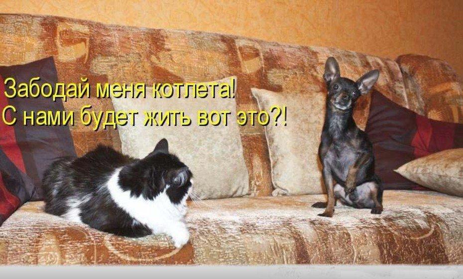 Картинки смешные приколы про кошек до слез