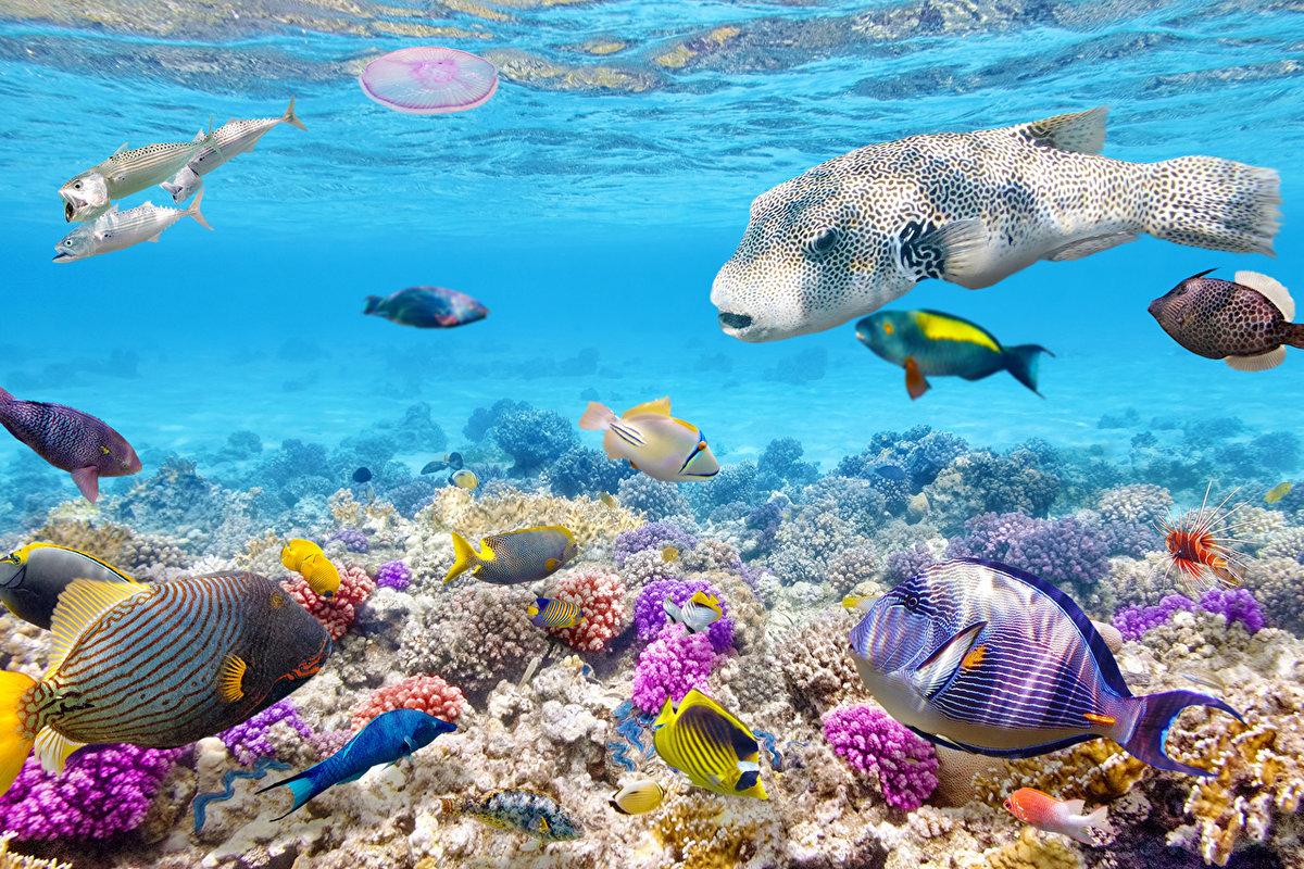 факт обои на рабочий стол подводный мир океана фото выше гостиная