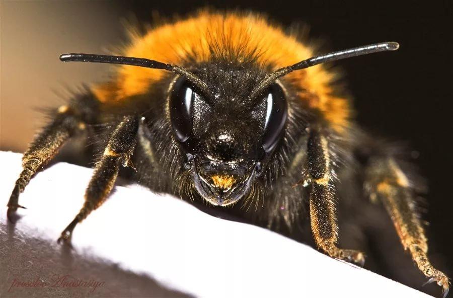 Большие картинки пчелы