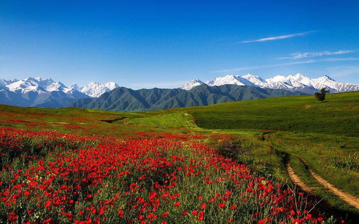 Киргизия картинки природа, днем рождения наташечка