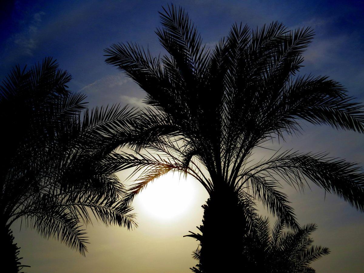 Картинка одинокой пальмы