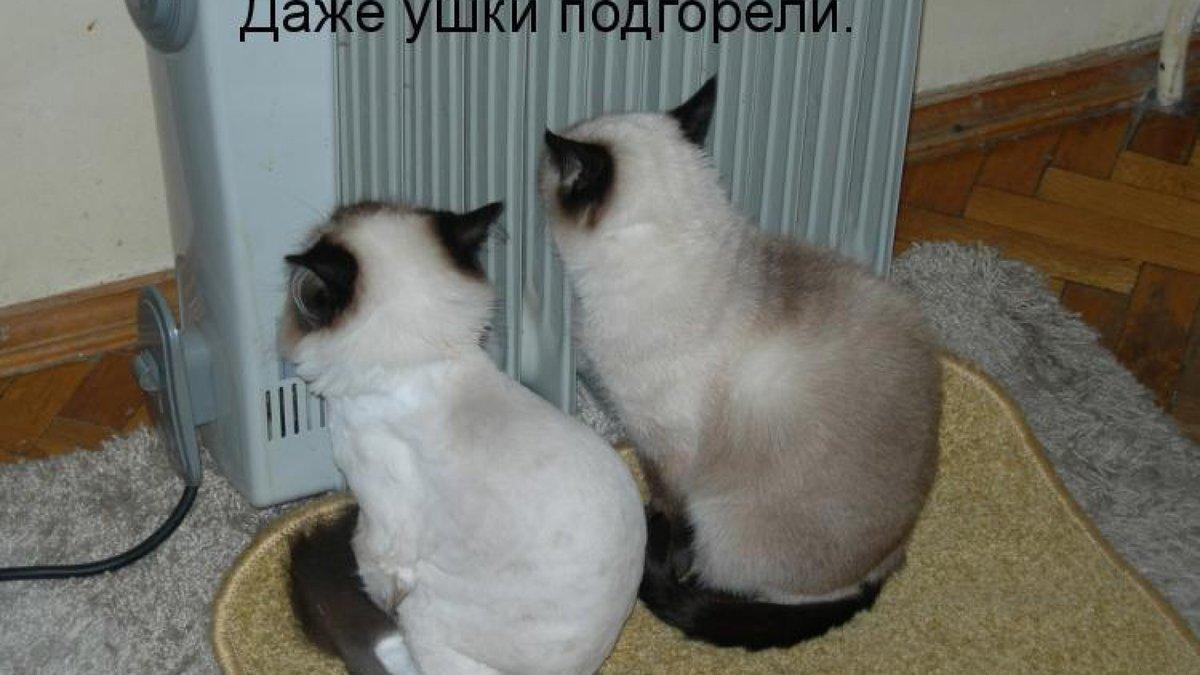 Прикольные картинки с надписями с животными