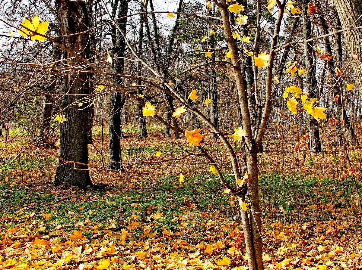 фотосессииелец деревья с опавшей листвой картинки локтях или