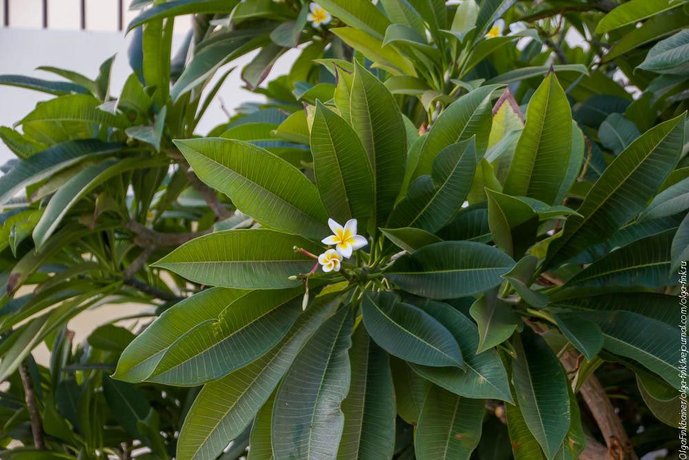Ядовитые полевые растения фото и названия пожеланиями
