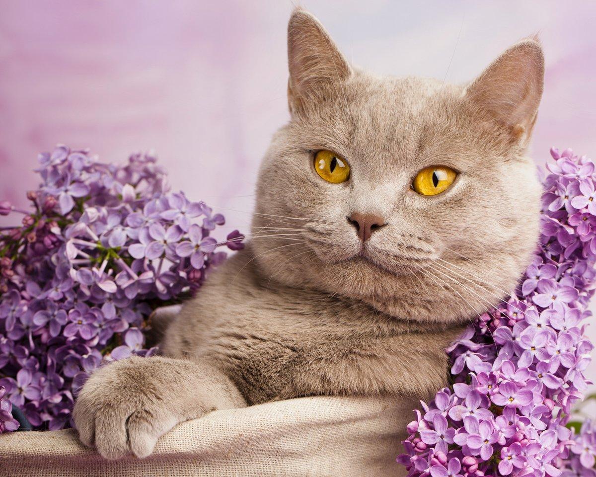 Кошечки в картинках, открытки днем