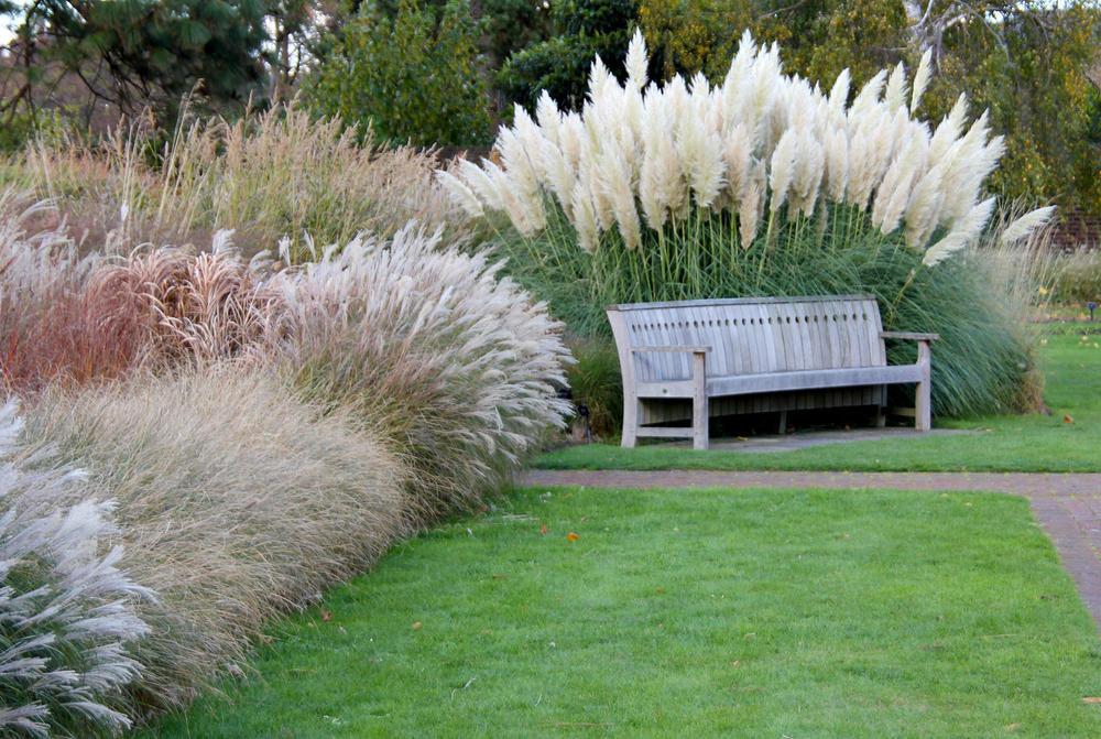 Картинки садовый интерьер со злаками