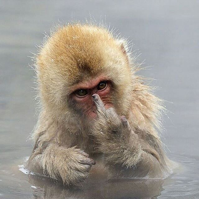 Картинка с обиженной обезьянки
