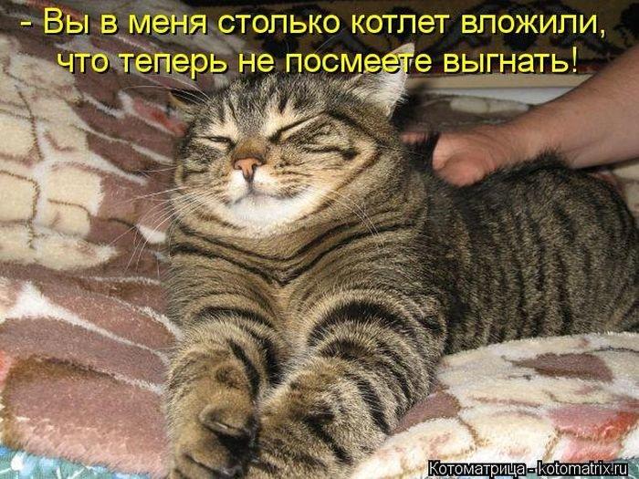 Смотреть смешные картинки до слез про кошек с надписями