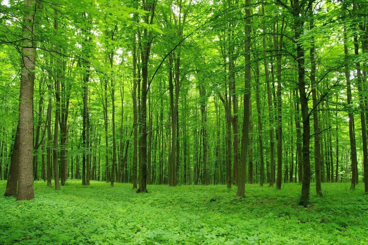 Девушки мастурбация в лесу на природе сексуальная девушка