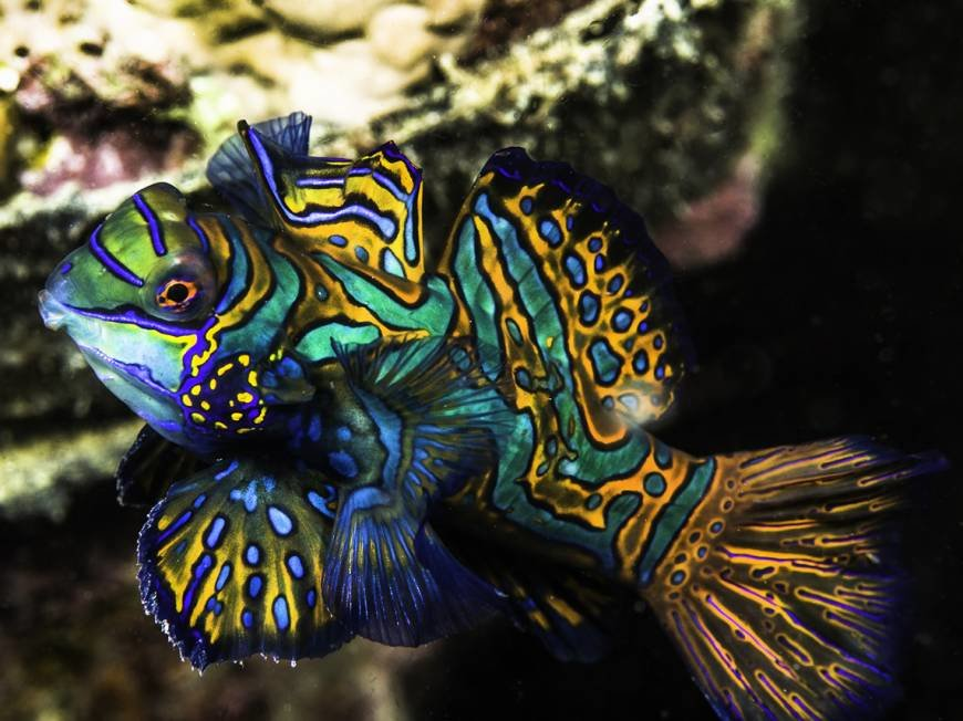 Самая красивая рыба в мире фото