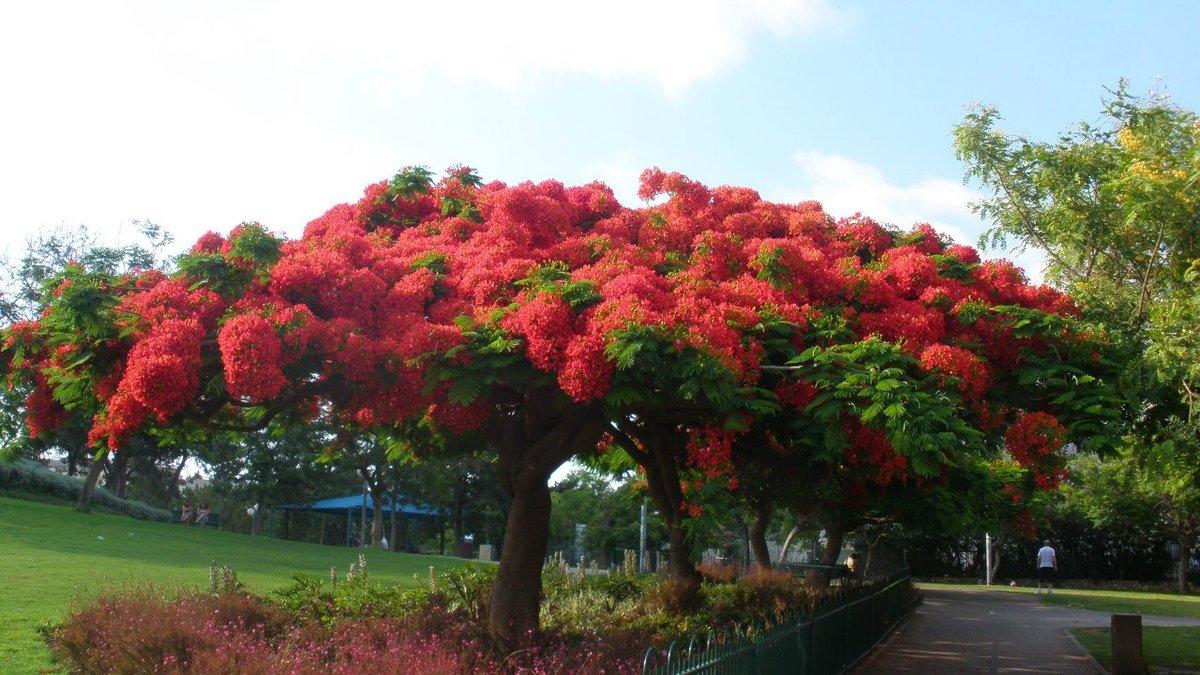 деревья израиля фото с названиями она окончила